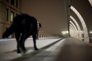 black lab dog walking across an empty bridge