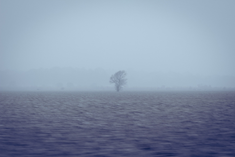 Blurred shot of tree in distance of a misty field